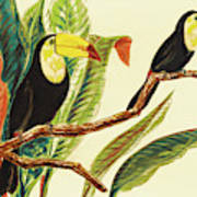 Tropical Toucans II Art Print