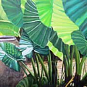 Tropical Translucence Art Print
