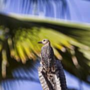 Tropical Woodpecker Art Print
