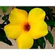 Tropical Yellow Blossom Art Print