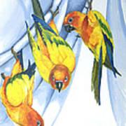 Trouble - Sun Conure Trio Art Print