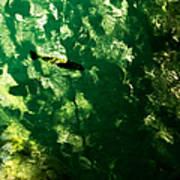 Trout In Emerald Art Print