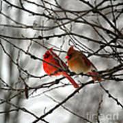 True Love Cardinal Art Print