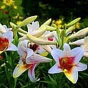Trumpet Lilies Art Print