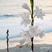 White Trumpet-shaped Flowers At Dana Point Beach California  Art Print