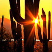 Tucson Sunset Art Print