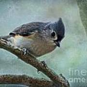 Tufted Titmouse With Snowflake Decorations Art Print