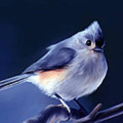 Tufty The Titmouse Art Print