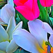 Tulip 35 Art Print