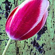 Tulip Against Green Wall Art Print