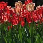Tulip Bunch Art Print