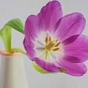 Tulip Delight Art Print