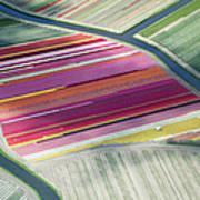 Tulip Fields, Aerial View, South Art Print