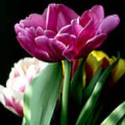 Tulip For Easter Art Print