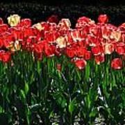 Tulip Forest Art Print
