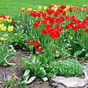Tulip Gardenscape Art Print