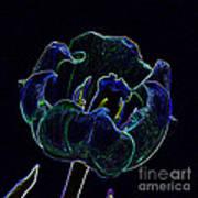 Tulip Glowing In The Moonlight Art Print