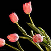 Tulip Happy Art Print