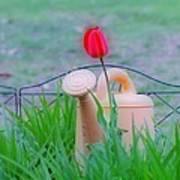 Tulip Hdr Art Print