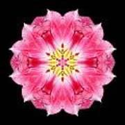 Tulip Peach Blossom IIi Flower Mandala Art Print