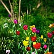 Tulip Rainbow Art Print