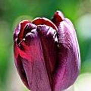 Tulip Rave Art Print