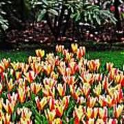Tulip Stripe Garden Art Print