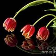 Tulip Trio Art Print