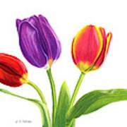 Tulip Trio Art Print by Sarah Batalka
