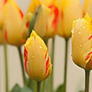 Tulips 6 Art Print