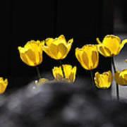 Tulips 6077 Art Print