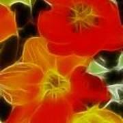 Tulips-6681-fractal Art Print