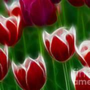 Tulips-6823-fractal Art Print