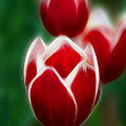 Tulips-6835-fractal Art Print