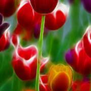 Tulips-7069-fractal Art Print