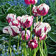 Tulips Among The Forget Me Nots Art Print
