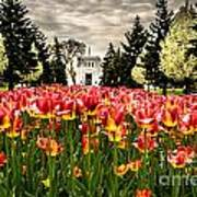 Tulips And Building Art Print