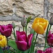Tulips And Stone Art Print