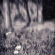 Tulips And Tree Shadow Art Print
