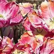 Tulips At Dallas Arboretum V58 Art Print