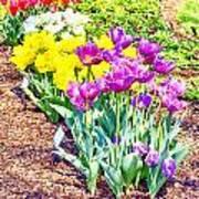 Tulips At Dallas Arboretum V65 Art Print