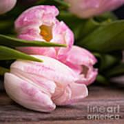 Tulips Closeup Art Print
