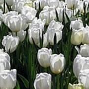 Tulips - Field With Love 19 Art Print