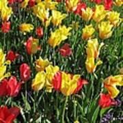 Tulips - Field With Love 49 Art Print