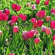 Tulips - Field With Love 54 Art Print