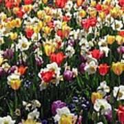 Tulips - Field With Love 57 Art Print