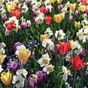 Tulips - Field With Love 58 Art Print