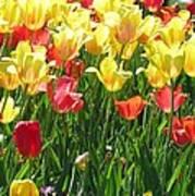 Tulips - Field With Love 65 Art Print