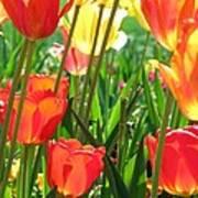 Tulips - Field With Love 69 Art Print