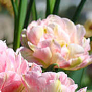 Tulips Flowers Garden Art Prints Pink Tulip Floral Art Print
